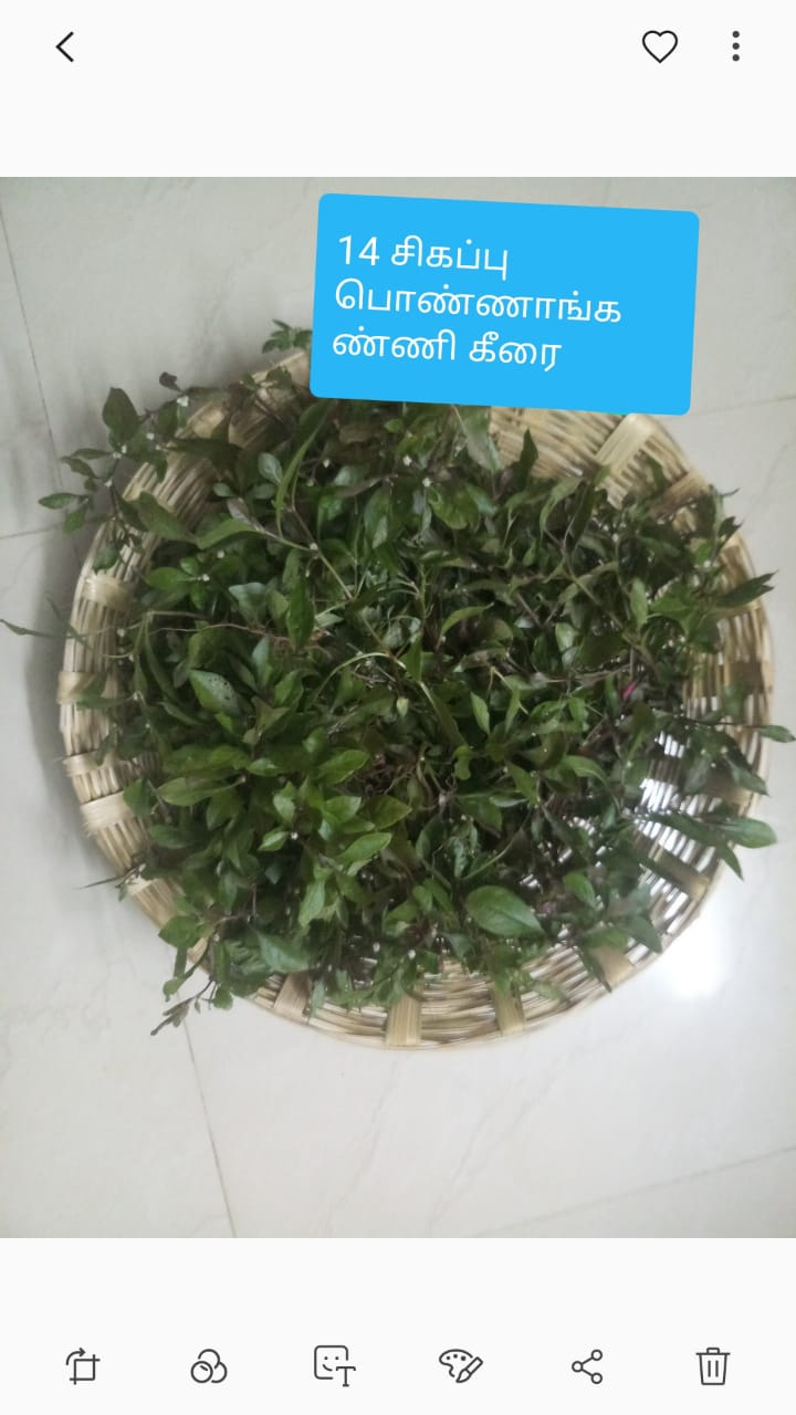சிகப்பு பொன்னாங்கண்ணி